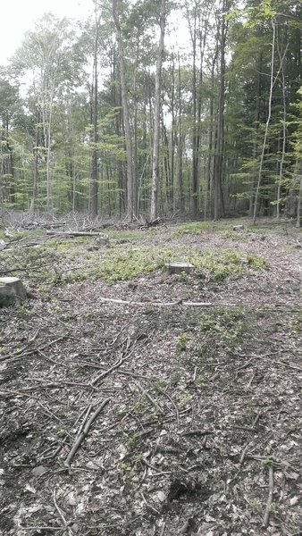 An area of forest management and selective cutting.