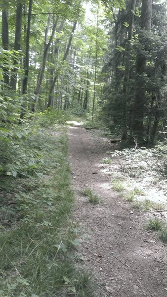 Deep in the state forest - wide track flow