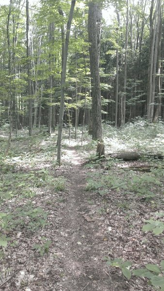 Another branch off singletrack off the main trail. Switchbacks and challenging.