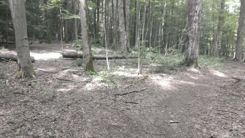Second branch off of singletrack just after massive downhill and sharp turn - missed the first branch closer to the road