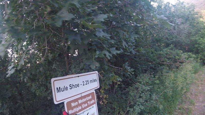 Bottom end of Mule Shoe Trail.