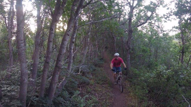 A fun decent on Bicentennial Trail.