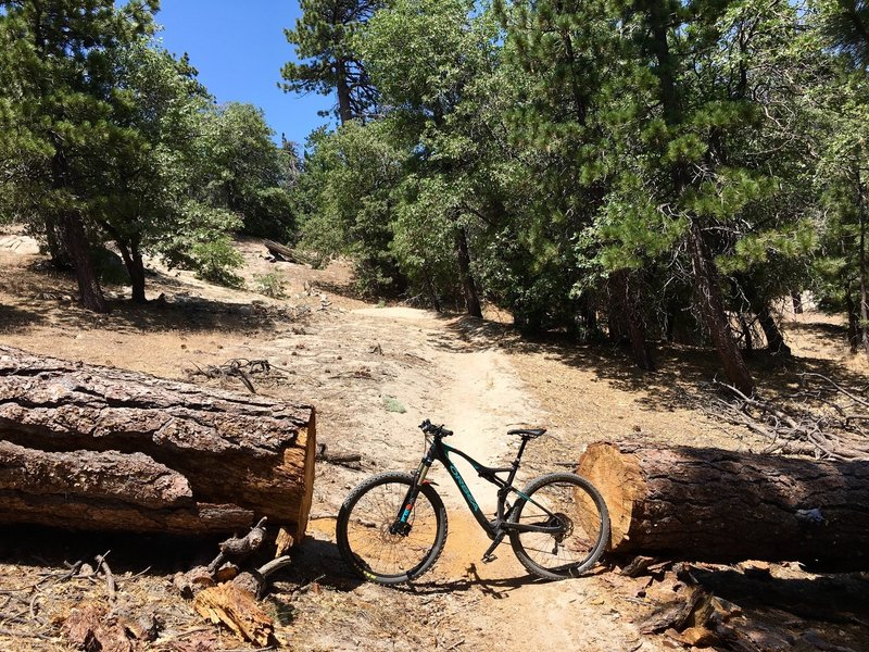Tree cut that's just wider than a 29er.