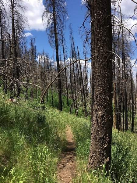 Riding along the post-fire, recovering hillside!