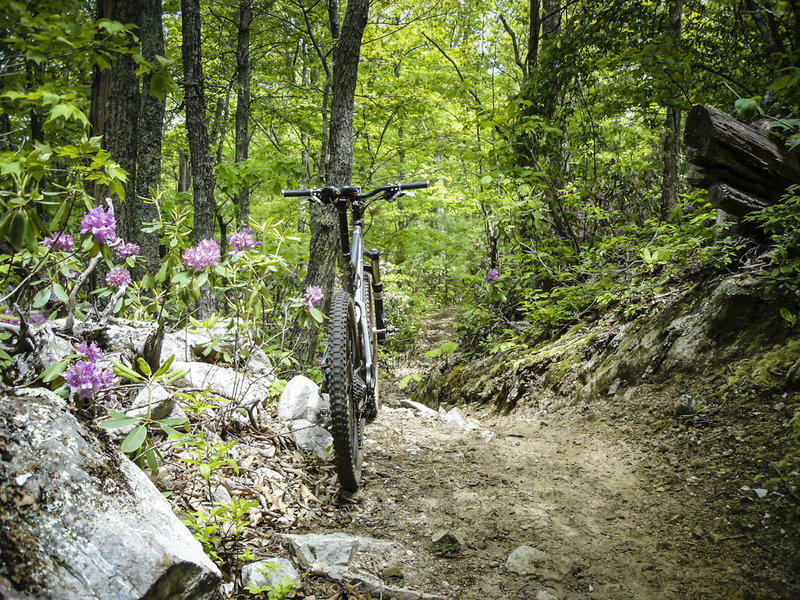 Dry Run Gap features some good-ole, no-frills dirt singletrack well beneath the forest canopy.