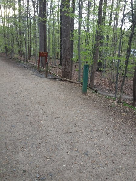 Intersection of Lake Accotink Trail and Lake Accotink Access Trail.
