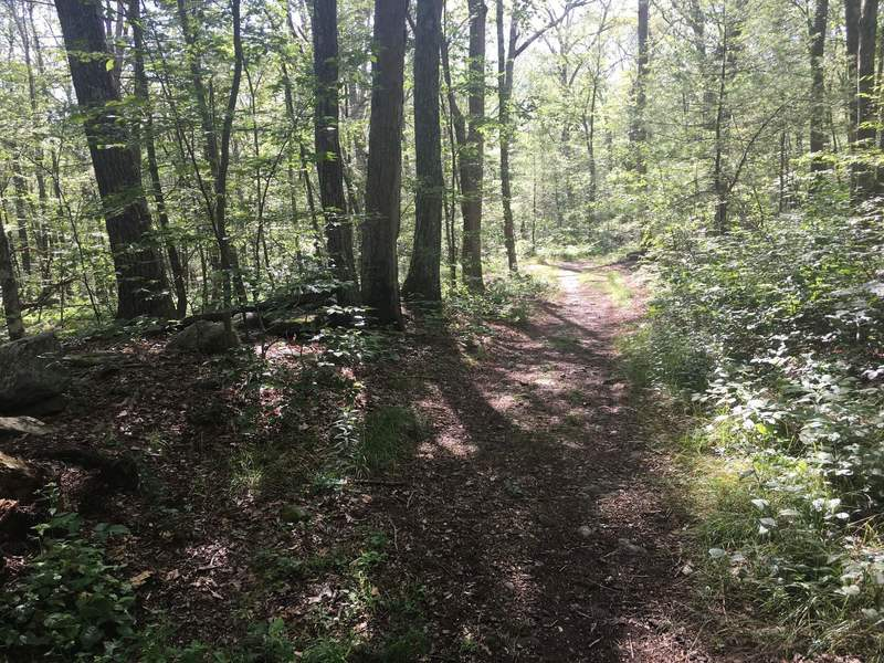 Looking west at junction of Red and Orange Trails. A small wooded triangle is formed by the intersection of these two trails.
