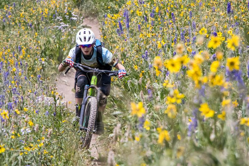 Amazing wildflowers on the lower part of Teocalli Ridge.