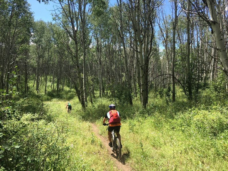 Section of smooth singletrack on the Raggeds Trail.