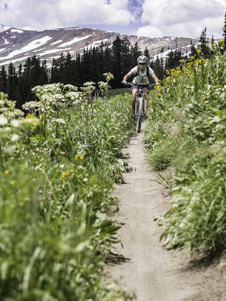 Bar high alpine wildflowers line the meadows for miles.