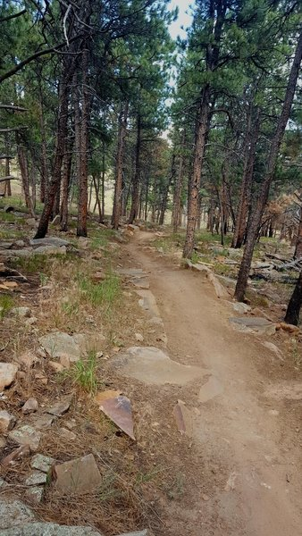 Love the easy flow of this trail.