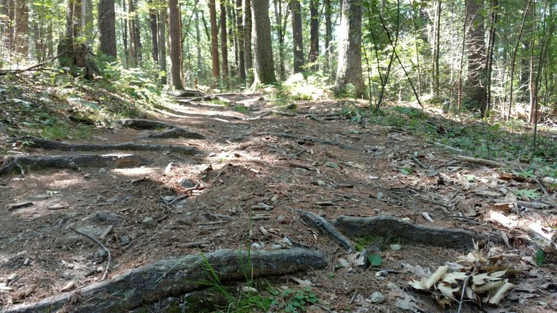 Roots and a rougher tread are common on the Deer Run trail.
