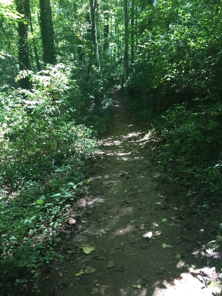 Smooth singletrack, with a smattering of roots