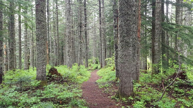Lovely forested singletrack section.