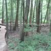 Bridge on Hognose Snake Loop.