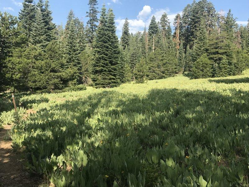 Beautiful field of late wildflowers.