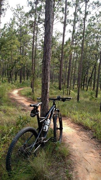 Riding Munson hills in Tallahassee Florida.