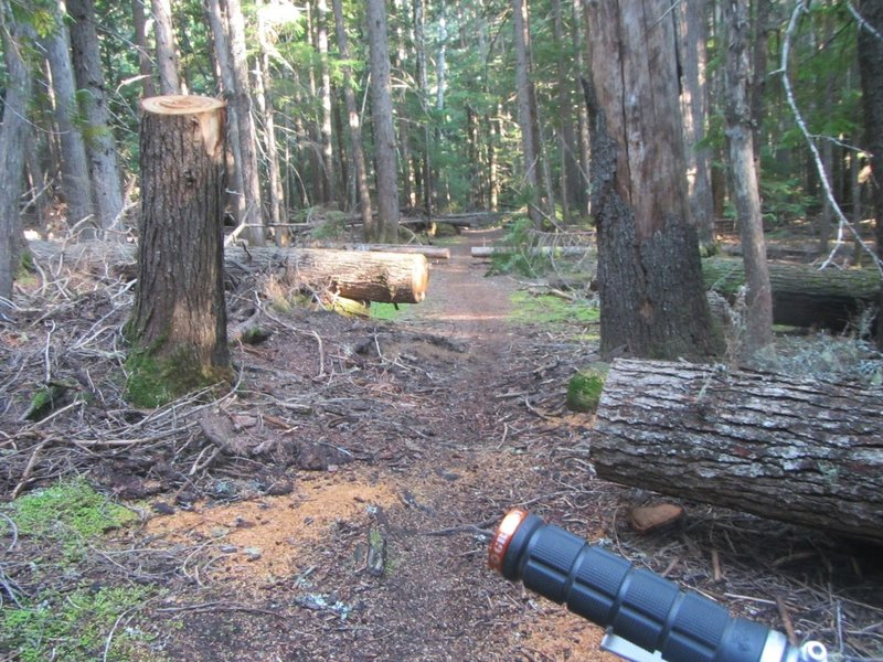 Recently cleared blowdowns near the start of the trail