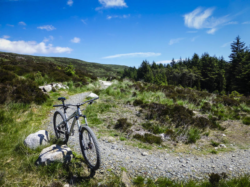 Wide open spaces abound on the Red Trail at Rostrevor Forest.