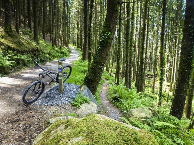The Red Trail at Rostrevor Forest passes through a lush green landscape and features a mix of forest road and narrow singletrack.