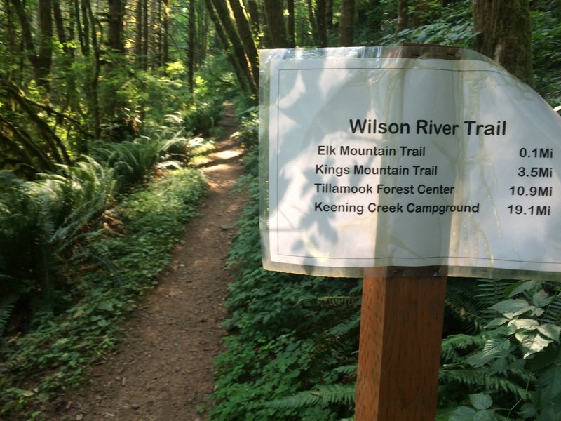 Close up trail sign for Wilson River Trail heading west from Elk Creek camping area.