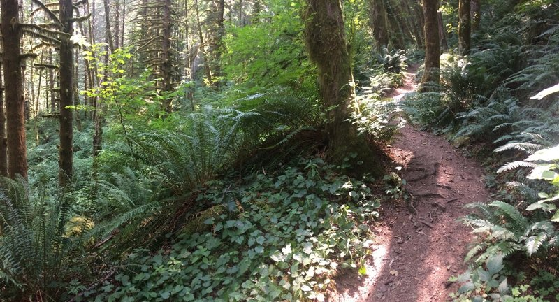 Beautiful, lung-buster climb immediately after turnoff from Elk Creek trailhead, Less than 1/4 mile long