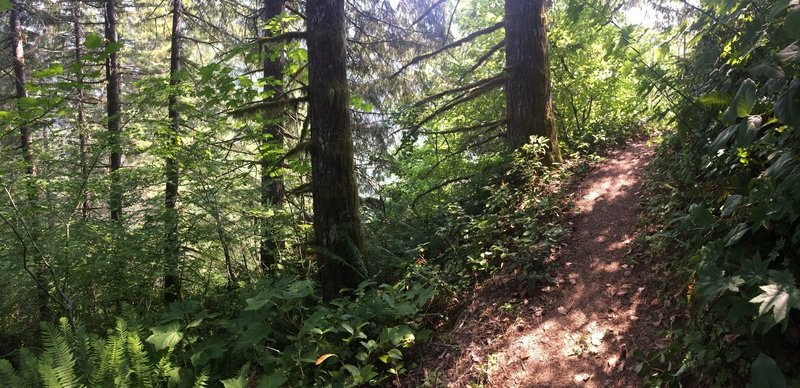 Simply gorgeous trail. Looks like this most of the 3.5 miles to Kings Mountain trailhead.