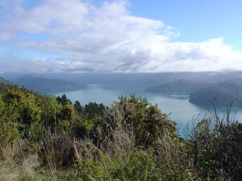 View over Kenepuru Sound