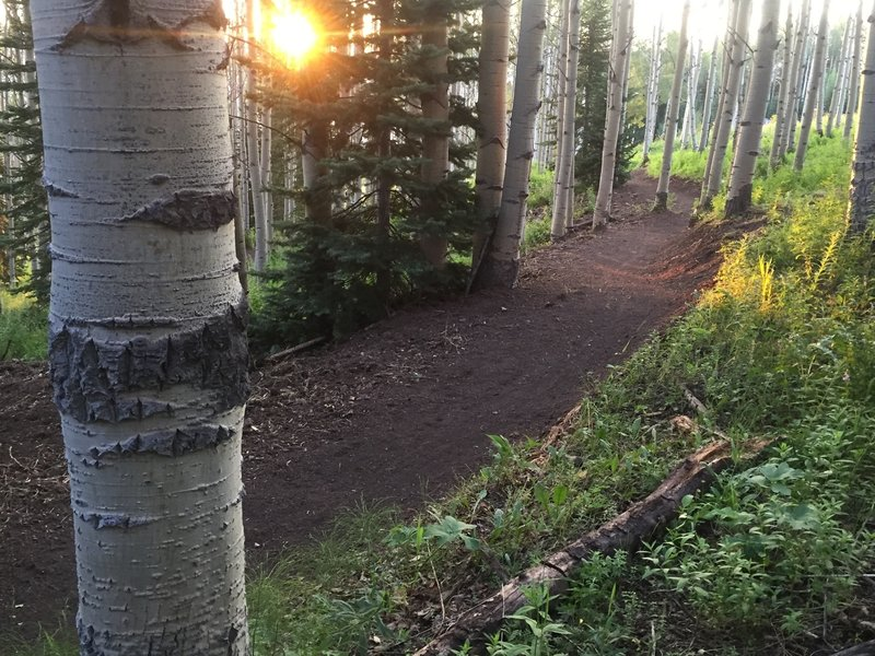 Discovery Trail gently climbing through aspen tree forest in between ski run meadows.