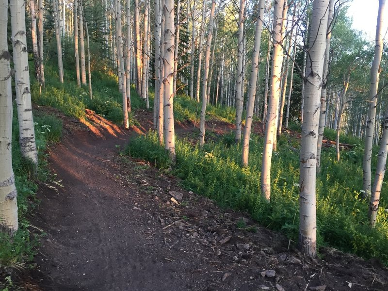 Discovery Trail gently climbs through sections of aspen tree forest.