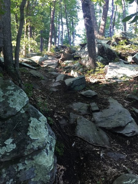 A rocky downhill section near the end of the Vista trail.
