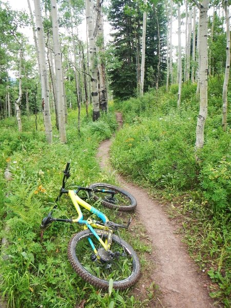 There are some pretty aspens on this trail, although nothing better than other trails in the area.