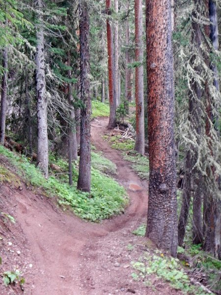 This flowy and loamy singletrack descent is one of my favorites in the area!
