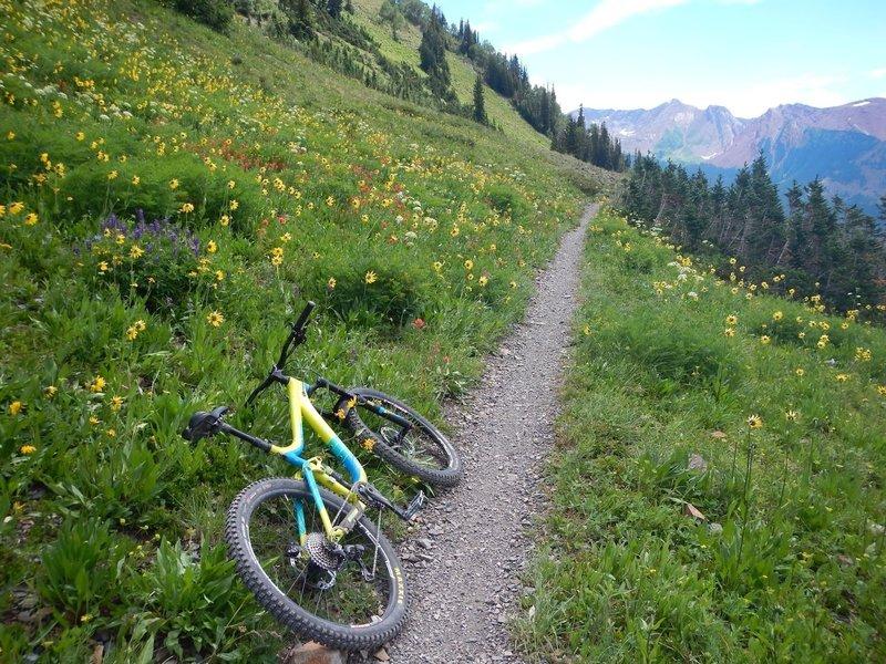 Bucket list item has to be riding Colorado high-country singletrack in wildflower season.