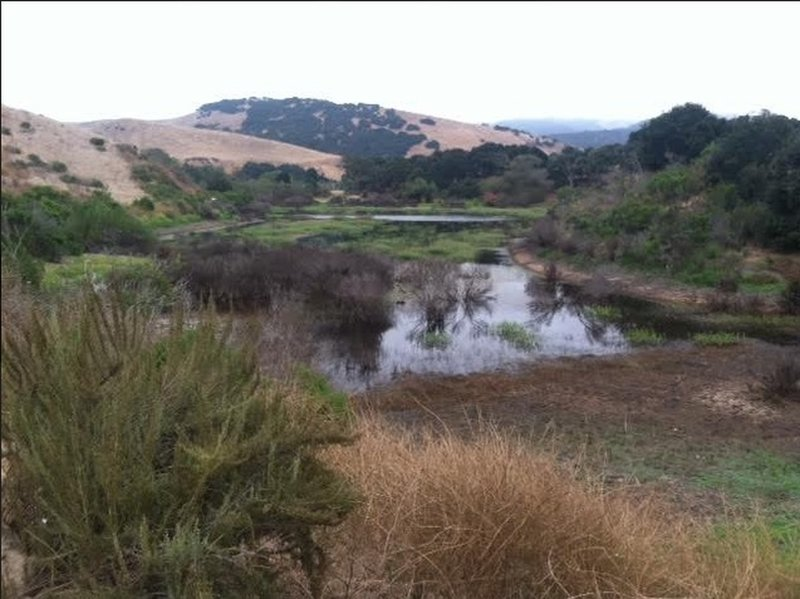 Boy Scout Lake... Fort Ord vernal pond at Station One Road and Oil Well Road