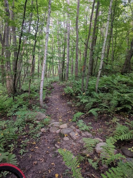 singletrack with a small rock crossing