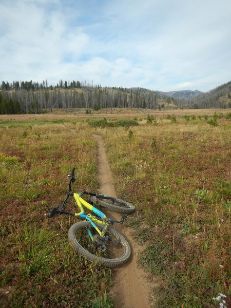 The big meadow at the top of the loop.