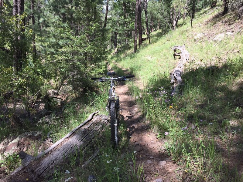 Singletrack portion of the loop before the toughest climb.