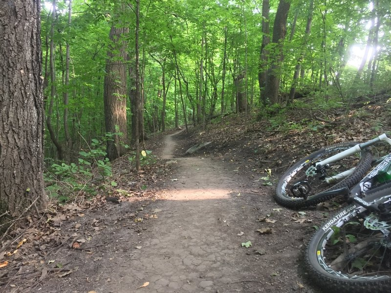 Wooded section after a switchback on the 'Advanced Loop' at Lake Rebecca Park