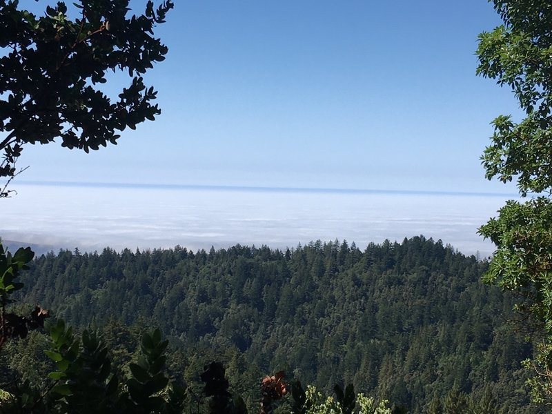 View of the Pacific Ocean from Fir Vista Point