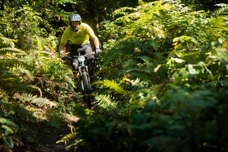 Kevin Quillan wades through a deep thicket of ferns at the bottom of Double Down.