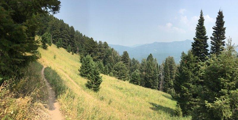 Trail carves through a high meadow
