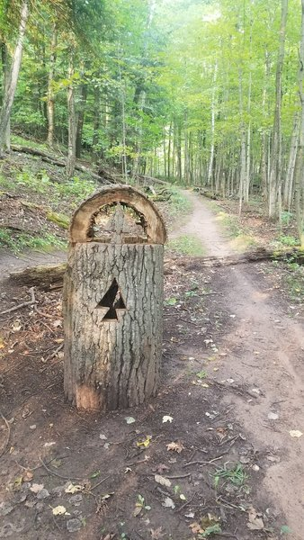 Nifty things the trail network does when trees fall