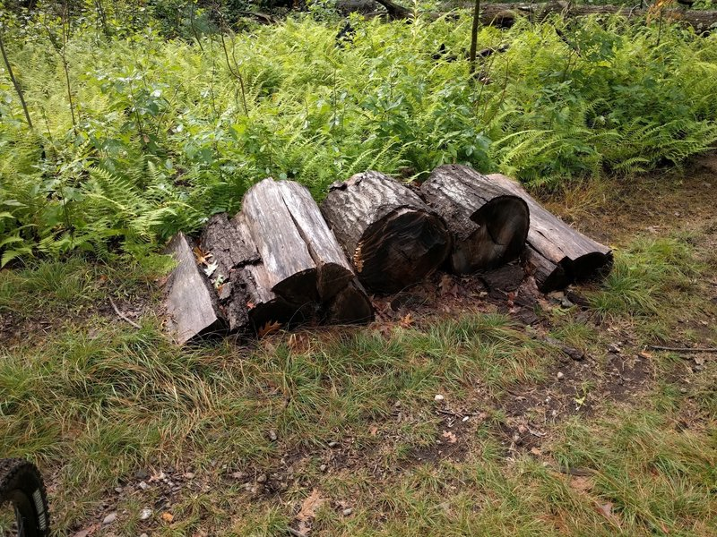 Reusing fallen trees for making rollers.