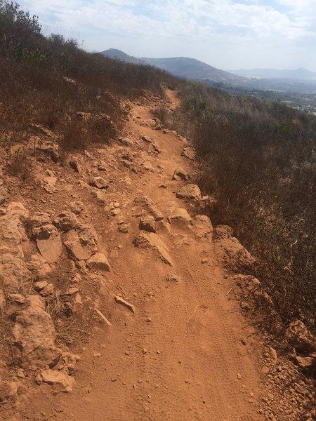 Horned Lizard Rocky Descent