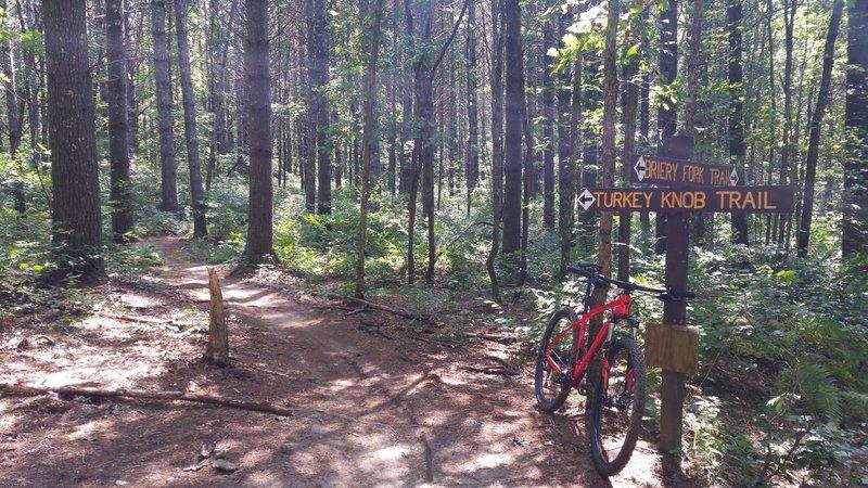 Bottom of Turkey Knob Trail
