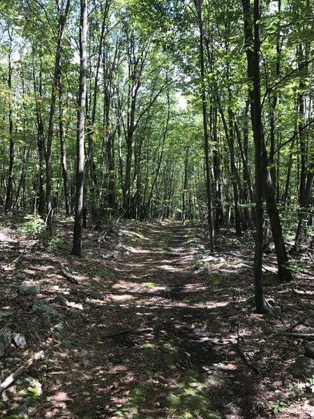 A bit down the trail