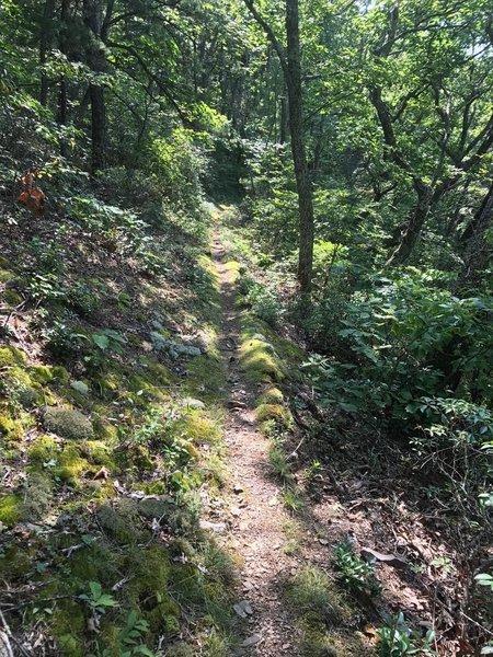 Shenandoah Mountain Trail