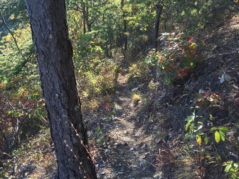 Whetstone Ridge mid section