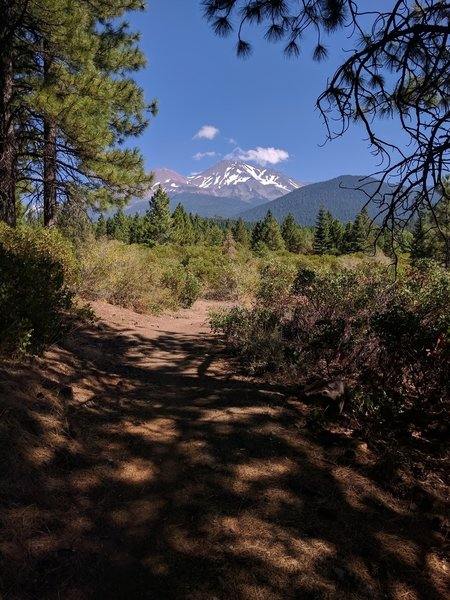 View of Mt Shasta.